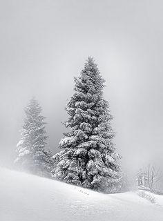 64 Ideas painting landscape snow winter scenes for 2019 Winter Magic, Winter Snow, Winter White, Winter Trees, Snowy Trees, Tree Photography, Winter Photography, Landscape Photography, Winter Schnee