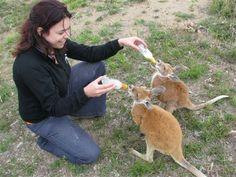 Volunteer abroad (animal conservation)