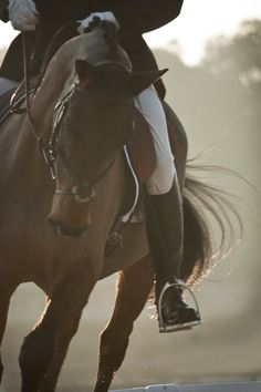 Equestrian - I really miss the unity of horse and rider.