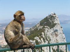 Apen in Gibraltar - Het andere Spanje