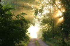 Foto gratis: De Distancia, Niebla, Árboles - Imagen gratis en Pixabay - 1605956