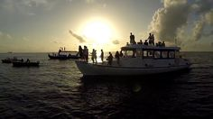 Sunset Punch Cruise Meeru Island Resort Maledives Dolphines
