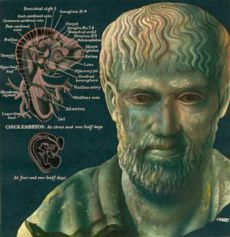 Ancient Greeks had extensive knowledge of the near shore environment of the Mediterranean Sea. Aristotle, the Greek philosopher, described many marine forms and their features. Famous Philosophers, Greek History, Alexander The Great, Biologist, Marine Biology, Ancient Greece, Lessons Learned, Writing A Book, Anatomy