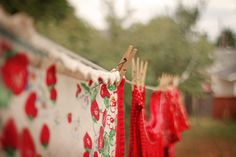 Convert to an old fashioned clothesline for cheaper laundry and longer clothing life. Strawberry Farm, Strawberry Patch, Strawberry Summer, Red Poppies, Red Roses, Red Farmhouse, Strawberry Fields Forever, Wild Strawberries, Love Garden