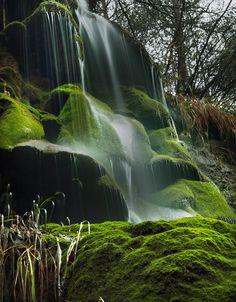 The moss - Barcelona, Spain by Lluis de Haro Sanchez