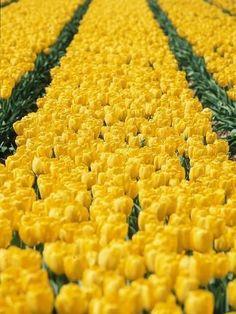 Yellow Aesthetic Pastel, Pastel Yellow, Mellow Yellow, Yellow Flowers, Hibiscus Flowers, Cactus Flower, Orange Pink, Exotic Flowers, Aesthetic Vintage
