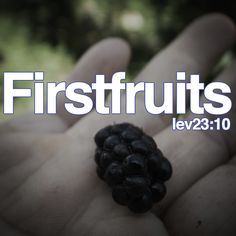 firstfruits leviticus 23:10