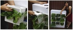 It employs drip watering, worms and compost to provide fresh edible plants.