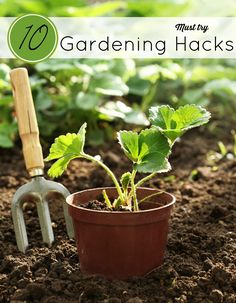 The weather is warm and we are outside getting dirty in the garden. These 10 Gardening Hacks will sure to save you time and a little green. AD