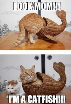 40 Amazing Cat Funny Moments Pictures | http://animals.ekstrax.com/amazing-cat-funny-moments-pictures/
