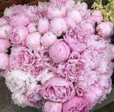 Pink Peonies | Chelsea Flower Show 2018