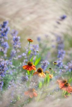 "These flowers and grasses are from our feature ""Tales of Grass"""