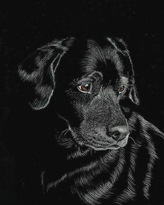 . . . .  #latest #newpost #dogsofinstagram #dog #instagramers #instagood #instalike #instlove #friend #blackandwhite #bff #simples #eye #awesome #cool #black #puppy #mondays #marketing