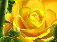 yellow rose ♥ ...my mother's favorite.