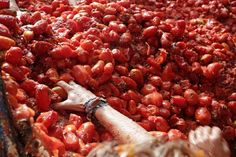 Tomato Sauce may as well be Soul Source love it   La Tomatina is a tomato food (fight) festival held in August, near to Valencia in Spain.