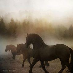 "5,900 Likes, 17 Comments - Dreamy Ponies (@dreamyponies) on Instagram: ""Dreamy misty Friesians by @laurazugzda """