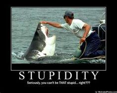 The owner of Sharkdiving Unlimited (Mike Rutzen) in Gansbaai, near Cape town South Africa, is passionate about the conservation of the Great White shark Stupid Pictures, Shark Pictures, Funny Photos Of People, Funny Images, Funny Pictures, Funny Pics, Fail Pictures, Funny People, Bing Images