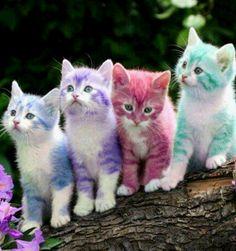 Spring Kittens...