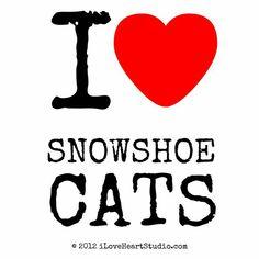 I love Korat Cats Korat Cat, Nebelung Cat, Chartreux Cat, Siamese Cats, Cats And Kittens, Bengal Kittens, Kitty Cats, Crazy Cat Lady, Crazy Cats