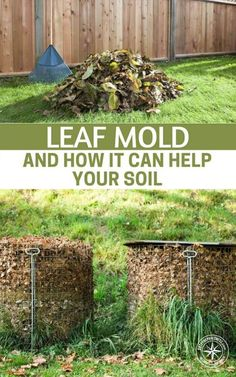 Leaf Mold and How it Can Help Your Soil — Although leaf mold should not replace your regular fertilizers and compost, as these help to provide the nutritional supplements that soil needs to prosper and survive, it is a fantastic addition to the Earth. #garden #gardening #gardeningtips #diy #frugal #gardencare