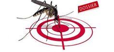 pourquoi certains sont plus piqués que d'autres par les moustiques ? Les Parasites, Mosquitos, Outdoor Play, Healthy Living, Gadgets, Gardening, Sport, Flowers, Recipes