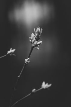 Andreas R. Mueller - Photography: Black and White - Spring Photography