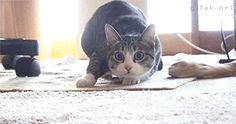 The 16 Silliest Cat Wiggles Of All Time