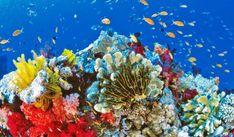 Protege arrecifes de coral.