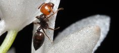 Acrobat ant update - Pumpkin Beth Indoor Ferns, Indoor Plants, Ant Species, Ant Problem, Uk Landscapes, Miniature Orchids, Bottle Garden, Herbs Indoors, Winter Flowers
