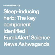 Sleep-inducing herb: The key component identified   EurekAlert! Science News Ashwaganda