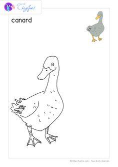 animaux-ferme-dessin-a-colorier-canard-coloriage