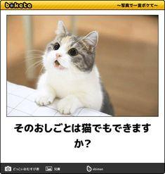 そのおしごとは猫でもできますか?