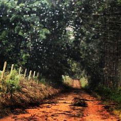.@amor_tece_dores | #amor_tece_dores #farm | Webstagram