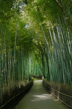 Path of Bamboo in Kyoto
