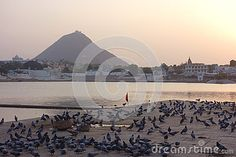 Photo about A view of Pushkar Lake in Rajasthan during a stunning golden sunset with many pigeons in the foreground. Image of fortress, most, ghats - 70659815 Lake View, Pigeon, India, Stock Photos, Celestial, Sunset, Outdoor, Image, Sunsets