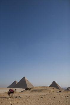 Camels At The Great Pyramids At Giza