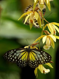 The butterflies wings makes an oval with many little ones in side of it. The leaves in the image are organic shapes. The image has value because the butterfly is dark and the leaves and back ground have a lighter colour to them.