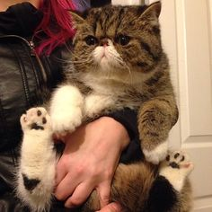 """12 Cats Who Are Showing Off Their Toesies – Meowingtons 