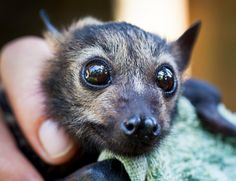 Single Look from Jasper the Bat Will Convince You to Help Save Bats