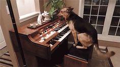 ピンポン犬