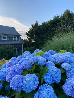 Bedroom Wall Collage, Photo Wall Collage, Dorm Pictures, Cape Cod Massachusetts, Plum Island, Coastal Gardens, End Of Summer, Blue Aesthetic, Nantucket