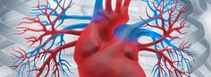 Cardiovascular Assessment Nursing Assessment, Nursing Tips, Nursing Students, Blood Pressure, Med School, Medicinal Plants, Emergency Medical Services, Health, Student Nurse