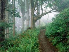 Cape Lookout State Park, Oregon