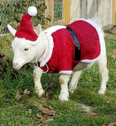 Goats In Sweaters, Lovers Romance, Funny Romance, Costume Ideas, Costumes, Under The Mistletoe, Animals, Outfits, Animales