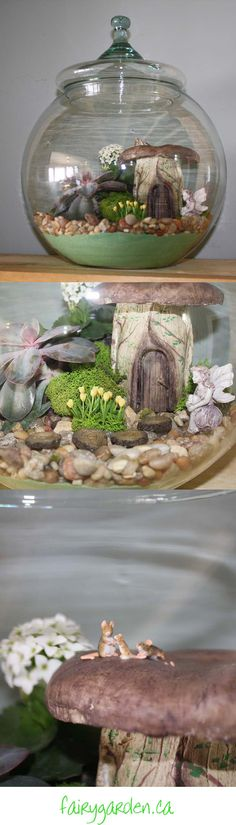 Making a fairy garden terrarium really chases away the winter blues.