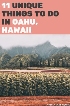 11 BEST THINGS TO DO IN OAHU! Although Oahu has many popular tourist attractions, there is a lot more to see on the island than just Waikiki Beach and the other typical stops. During your Oahu…More United States Beaches Доступ к сайту для информации Hawaii Honeymoon, Oahu Hawaii, Maui, Waikiki Beach, Visit Hawaii, Blue Hawaii, Honolulu Hawaii, Oahu Vacation, Vacation Spots