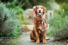 Anthony Helton of Purple Collar Pet Photography.  <3