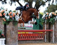A  beautiful hunter jumping its heart out at a beautiful horse show = perfection =)