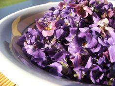 """Duftende Veilchen von unserem Garten für den Likör """"Blumiger Apfel"""" sind bald wieder zu sehen ;) Violetas perfumadas de nuestro jardín para el licor de manzana floral.  http://www.tiendas-leyla-wolf.de/gourmet/lik%C3%B6re/fruchtig/?logout=1"""