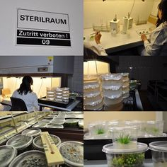 So entstehen unsere In-Vitro-Wasserpflanzen. Ein kleiner Einblick hinter die Kulissen, unserers Labors. Qualität – Made in Germany